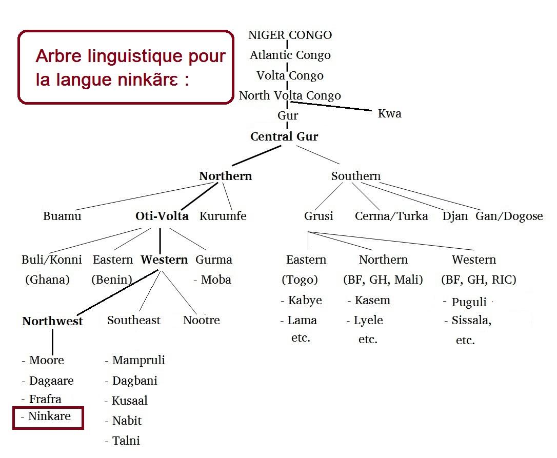 arbre-linguistique-pour-ninkare